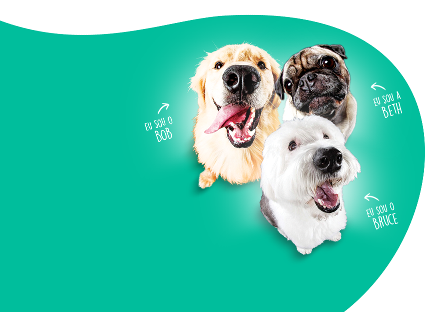 Cães Pet Society